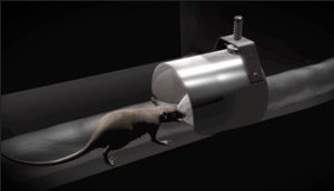 Metex Rat Blockers – not only for proofing against rodents!
